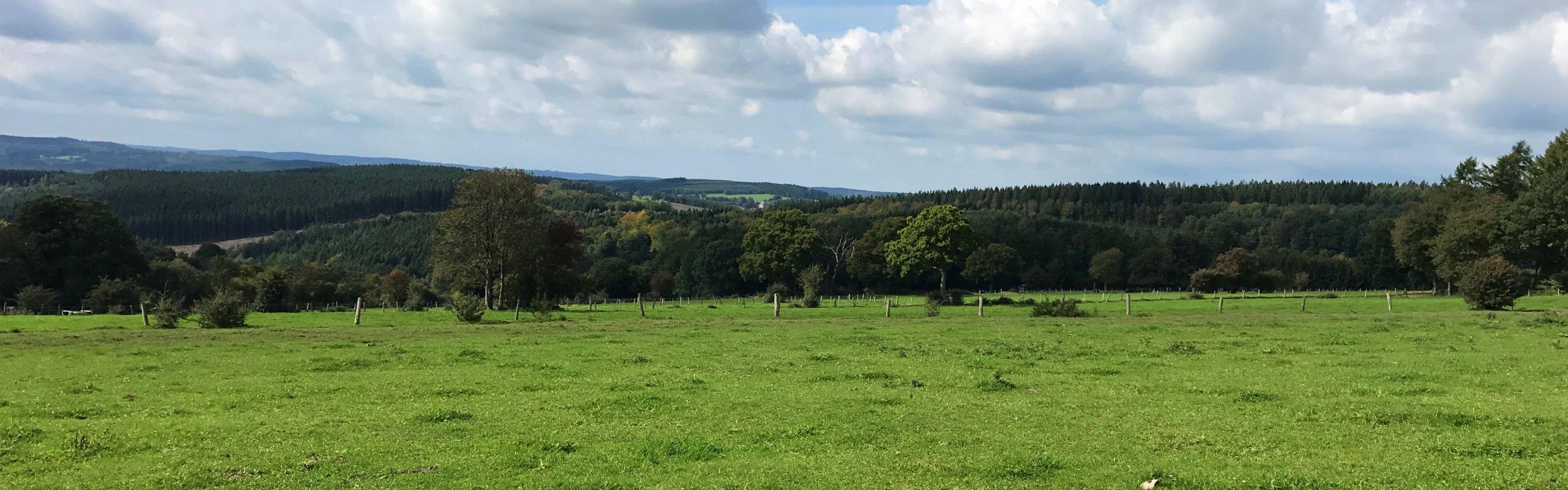 Ardennen nabij Vielsalm - Laurens Steijn