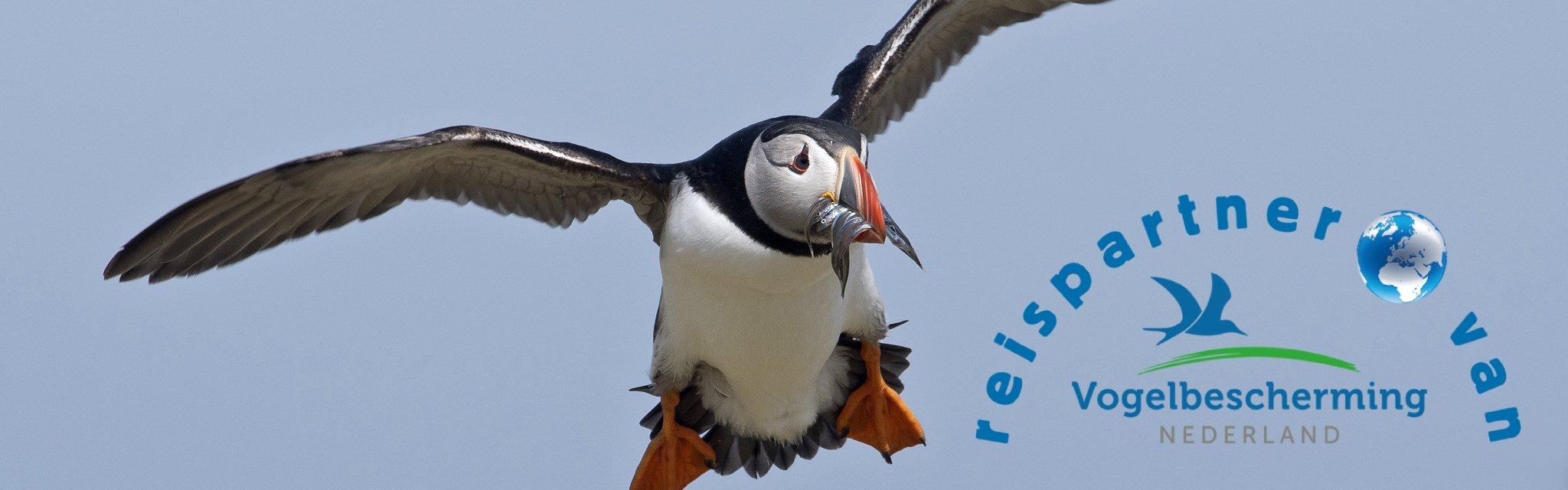 Papegaaiduiker - Jan Bosch - Vogelbescherming