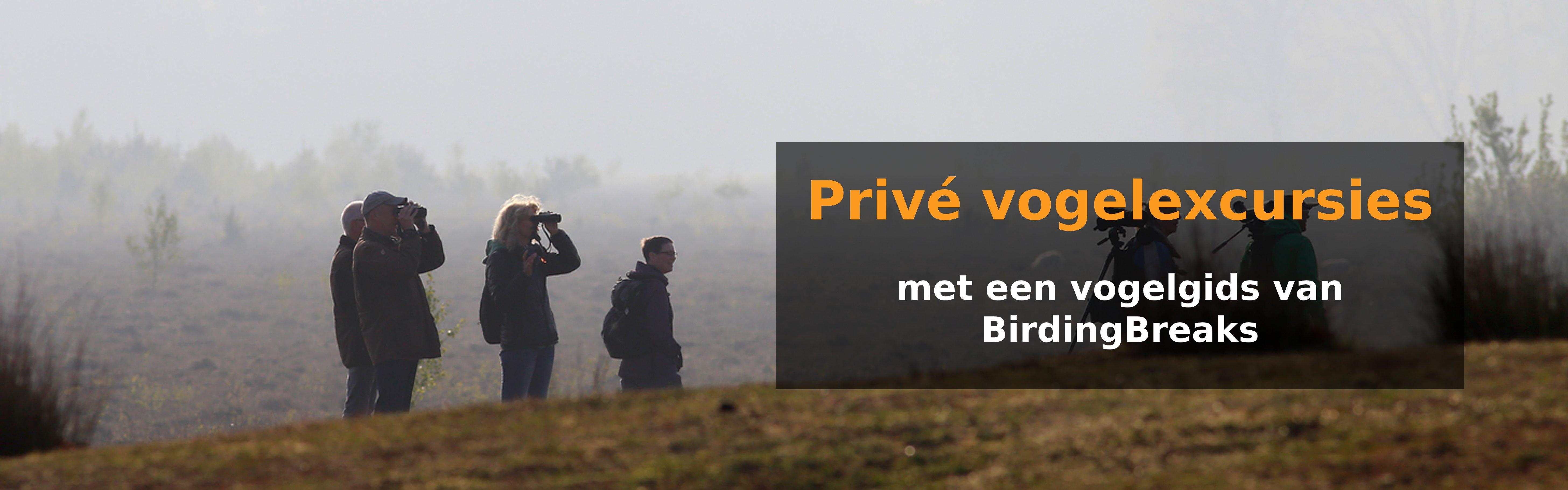 Privé-excursies met een gids van BirdingBreaks