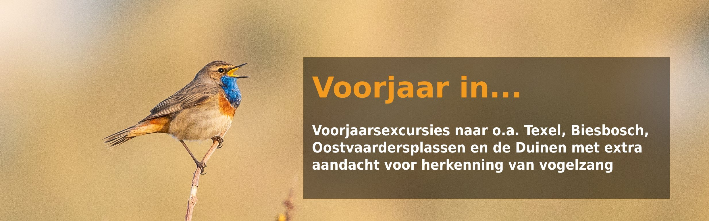 Voorjaar in Nederland