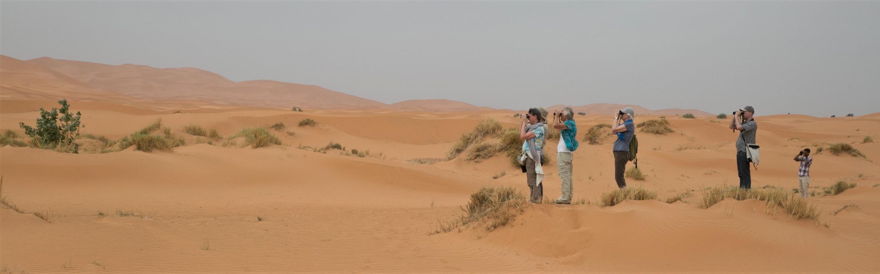 Vogelaars in de woestijn - Marokko