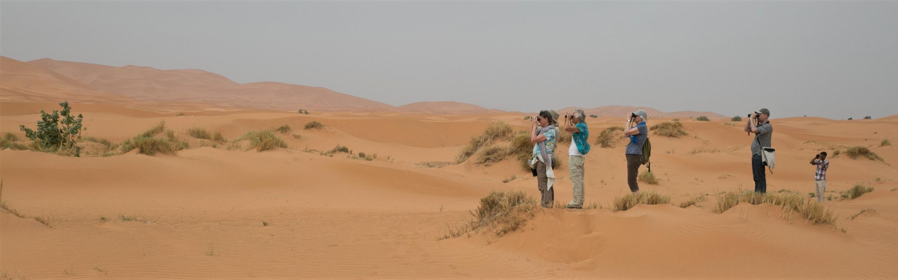 Vogelaars in de woestijn - Marokko - Barend van Gemerden